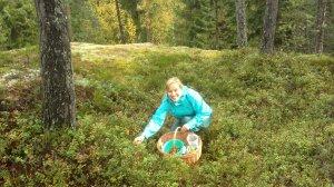 Picking berries and mushrooms